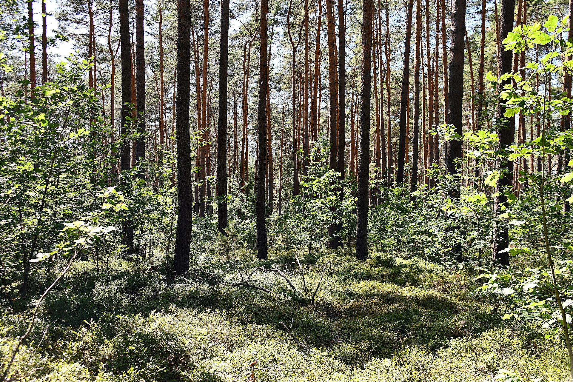 Einladung zur 3. regionalen Waldkonferenz